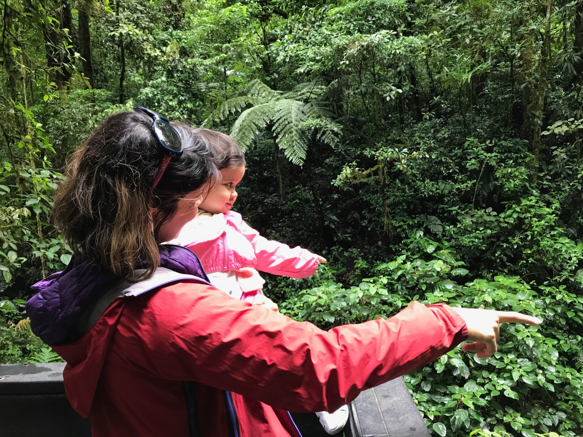 In search of the ResplendentQuetzal